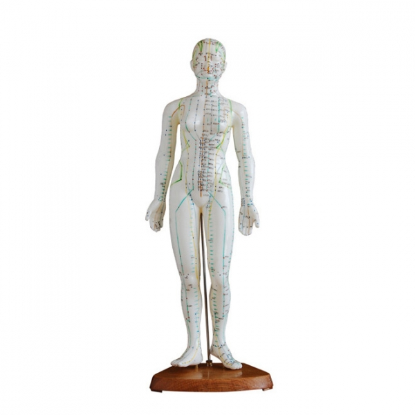 Menschliches weibliches Akupunkturmodell 48cm