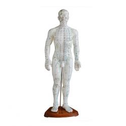 Männliches menschliches Akupunktur-Modell 50cm